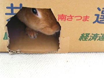 20091108-nozoki.jpg