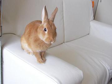 20100422-sofa.jpg